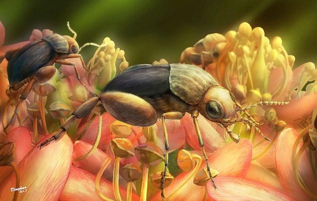 Il più antico fossile di insetto impollinatore intrappolato nell'ambra