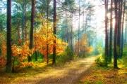 La resilienza del bosco: ascoltala su Focus.it