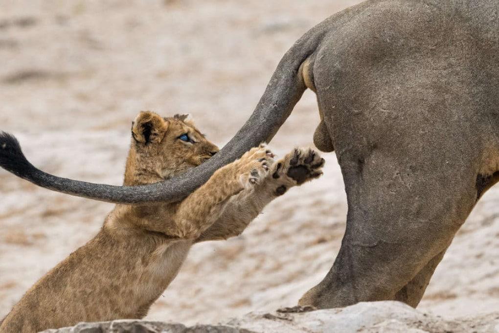 Comedy Wildlife Photography Awards: le foto di animali più buffe dell'anno
