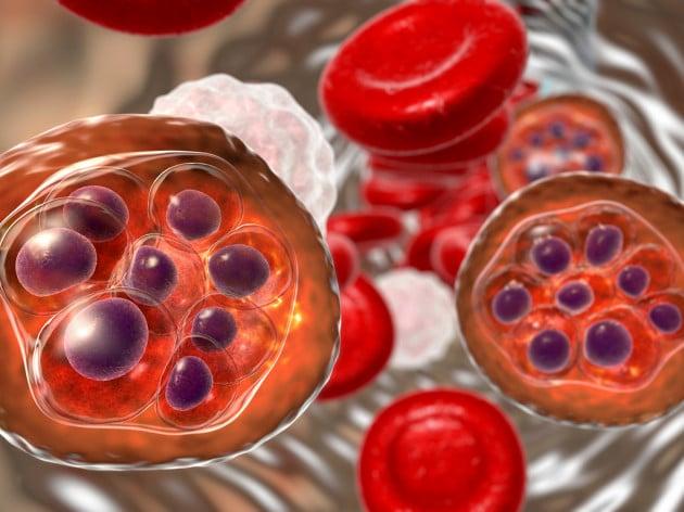 Plasmodium falciparum: parassita della malaria