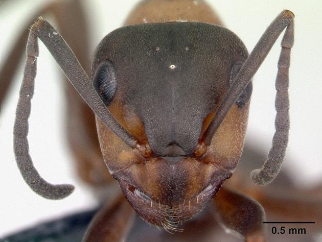 Le formiche rosse del bunker sovietico