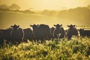 Crisi climatica: un freno alla produzione di carne entro il 2030