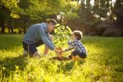 2020: Anno internazionale della salute delle piante