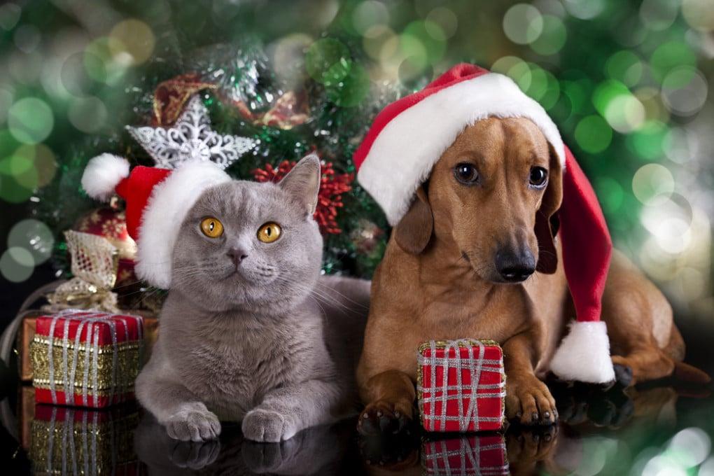 Buone feste 2019 anche  a cani e gatti: ma attenti alla ciotola!