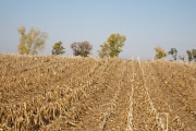 Aumento delle temperature: una nuova minaccia per i raccolti