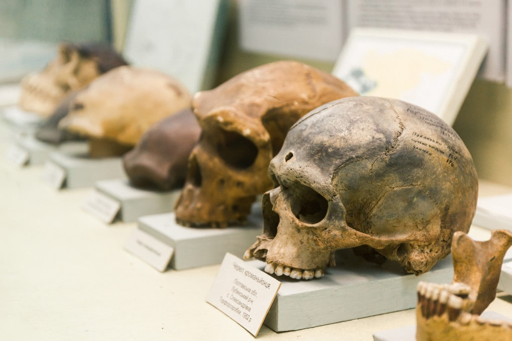 Paleoantropologia: resti fossili.
