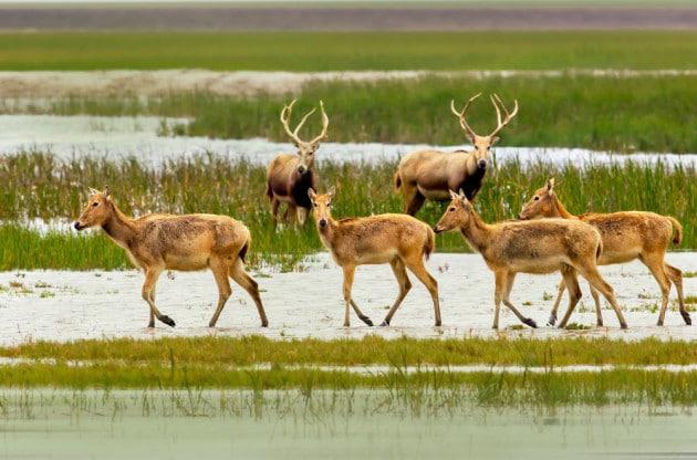 Animali: le specie estinte nello scorso decennio
