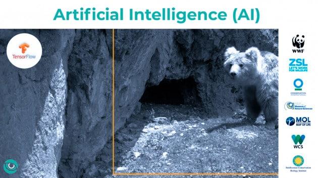 L'intelligenza artificiale di Google per la tutela delle specie a rischio