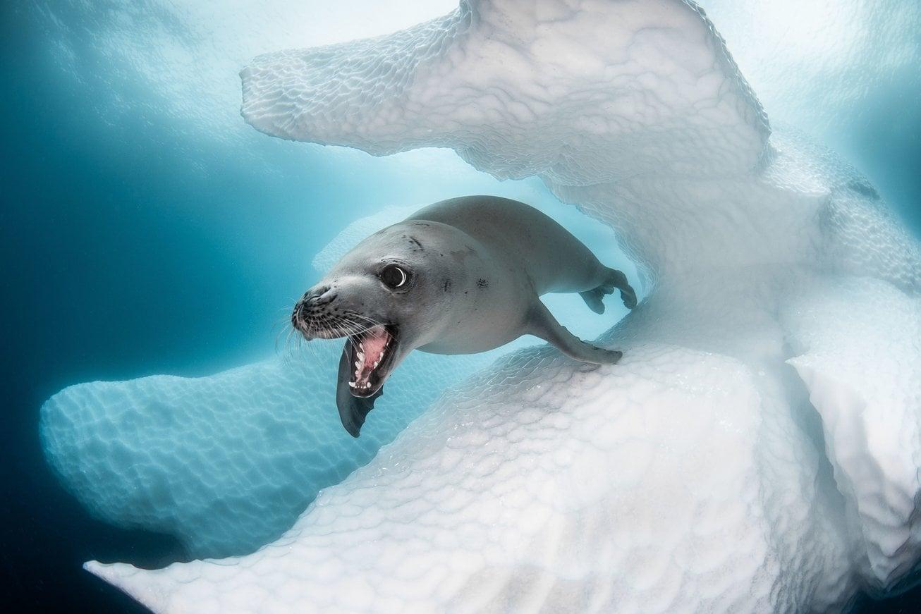 Ocean Art Competition: le più belle creature marine