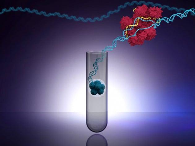CRISPR sugli embrioni in Cina, problemi anche nel consenso informato