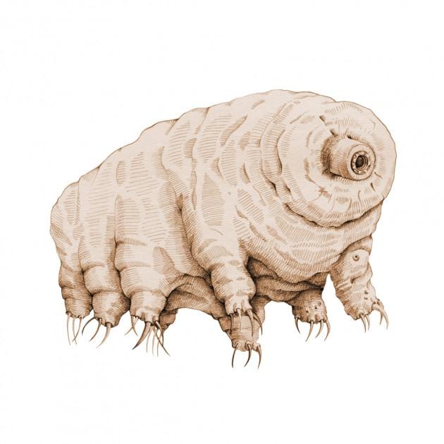 I tardigradi e le alte temperature