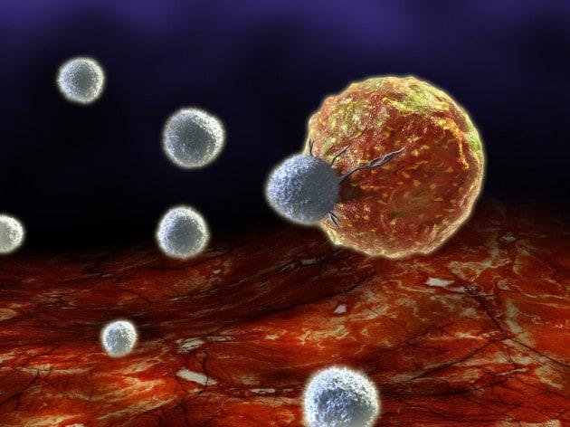 Nel sistema immunitario le basi per un'arma