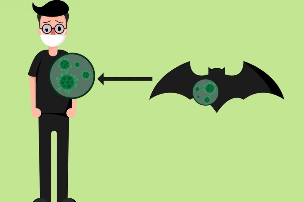 Pipistrelli e umani