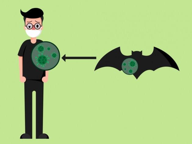 Coronavirus: perché i pipistrelli non si ammalano?