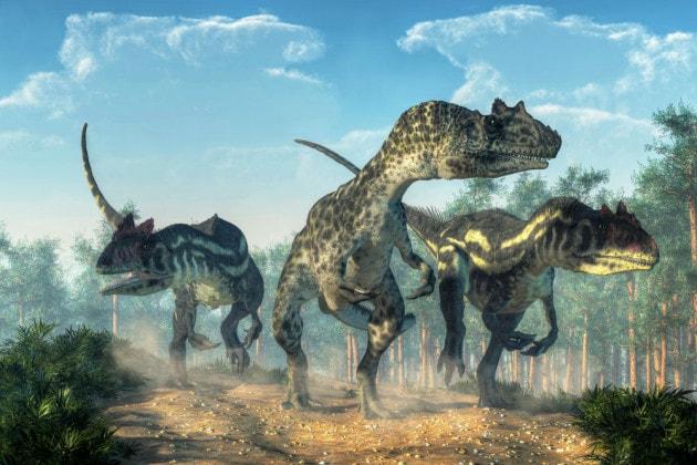 Dinosauri: scoperto un nuovo allosauro
