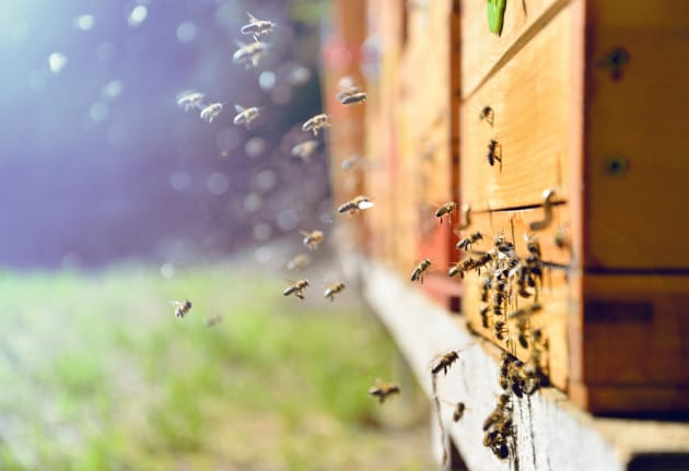 Batteri modificati per salvare le api