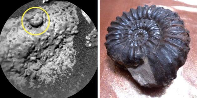 Un'ammonite su Marte...