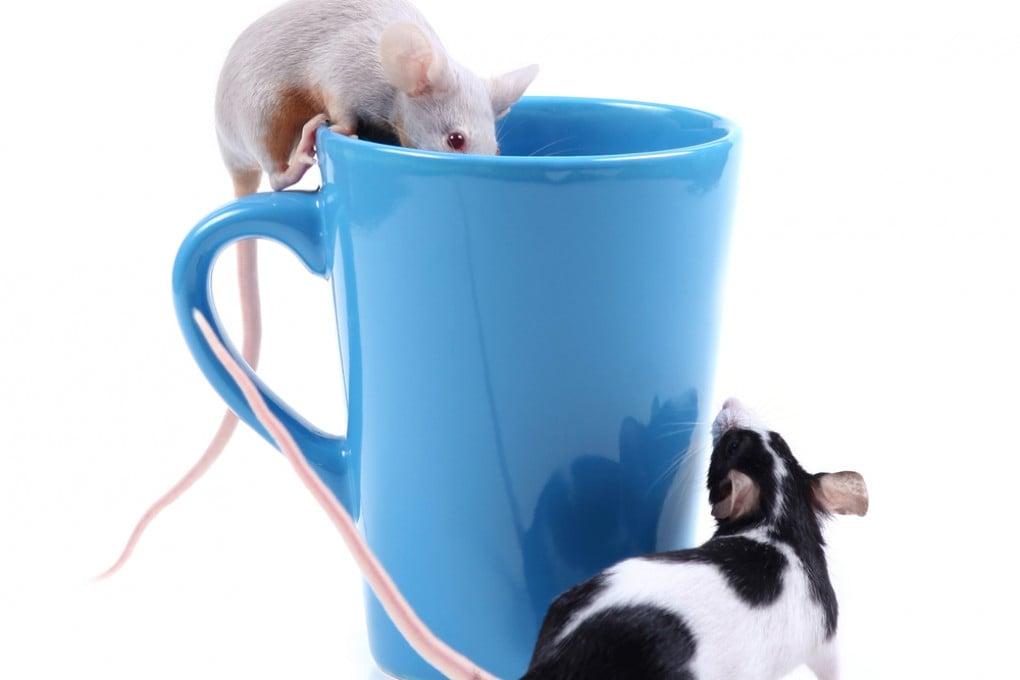 Leggere tra le righe: le capacità deduttive di uomini e topi