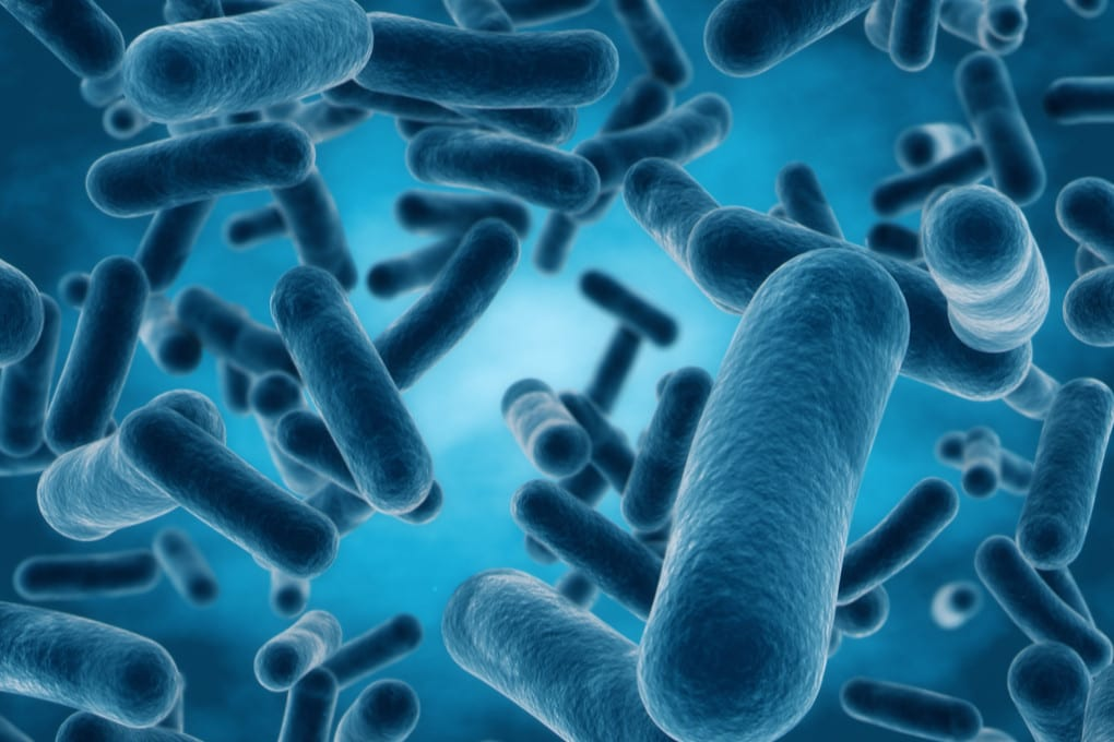 Illustrazione: batteri.