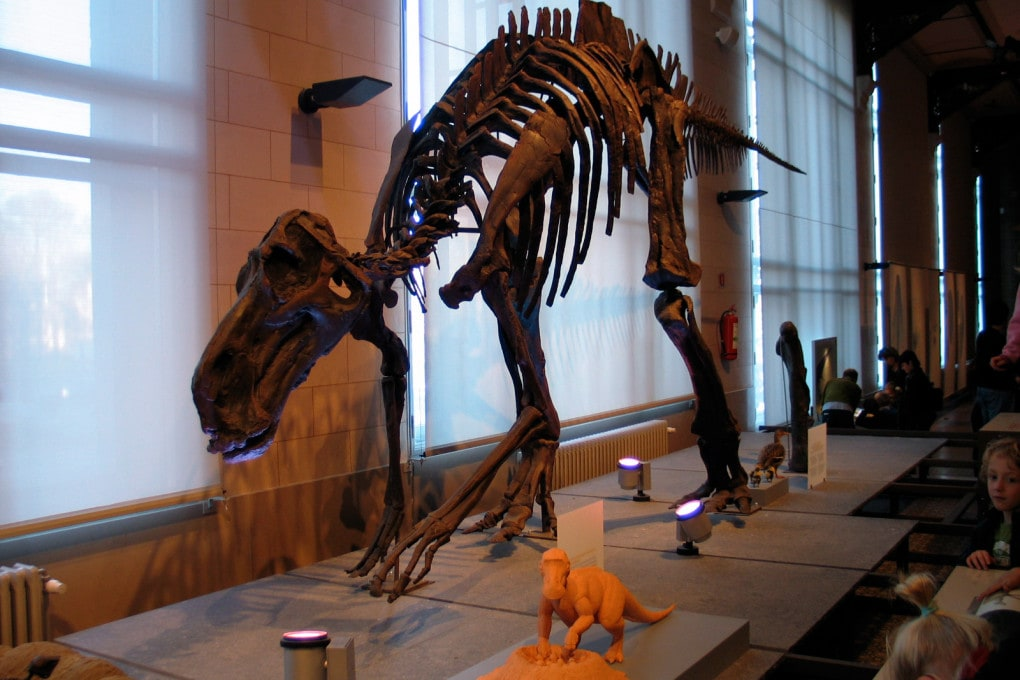 Dinosauri a sangue caldo: maiasaura (Maiasaura peeblesorum).