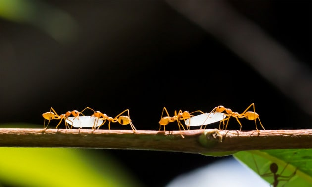 Le formiche sono schiaviste?