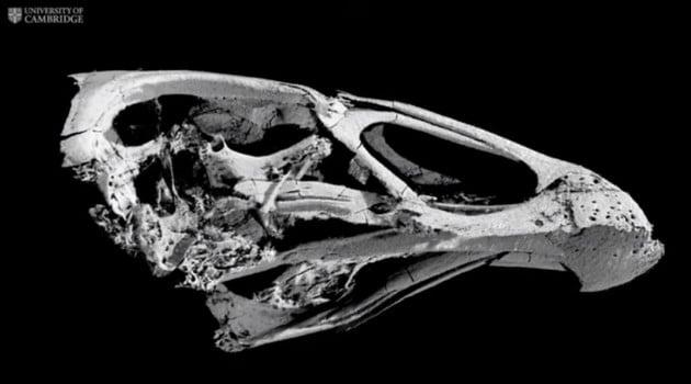 Fossili: Wonderchicken, il pollo di 66 milioni di anni fa