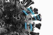 Dal MIT una proteina che chiude la porta al coronavirus