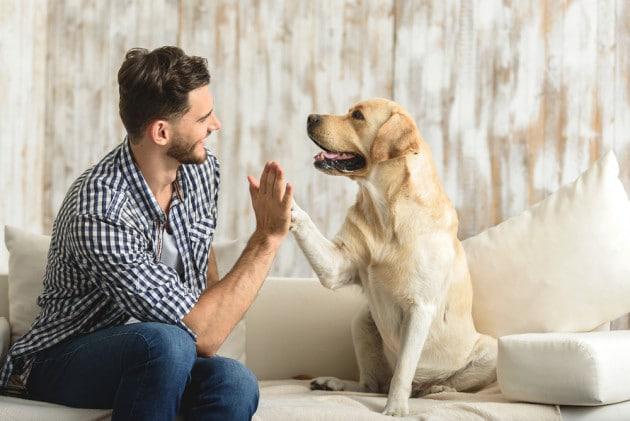 I cani sanno anche contare?