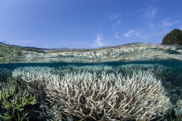 Nuvole più chiare contro lo sbiancamento dei coralli