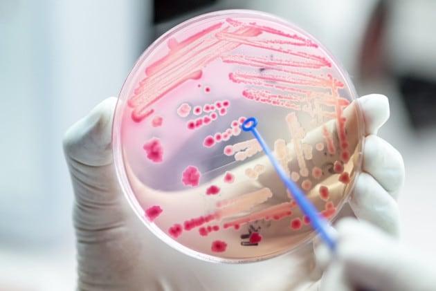 La covid potrebbe favorire l'avanzata di superbatteri resistenti agli antibiotici