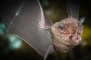 Gli USA hanno cancellato un progetto di ricerca sull'origine animale dei coronavirus