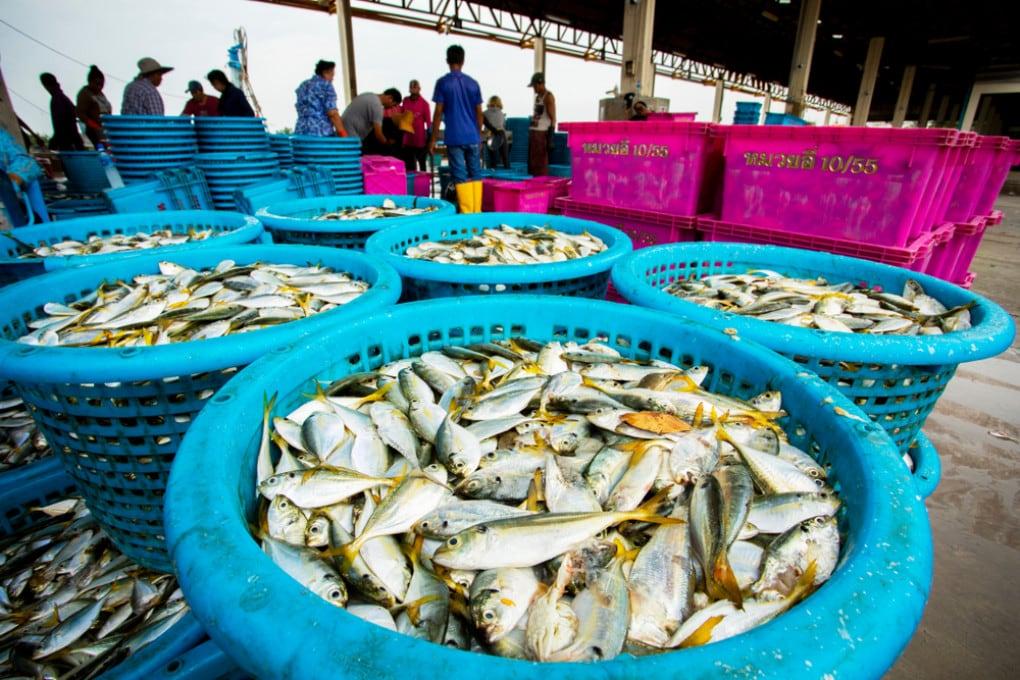 Il mercato ittico di Bangkok, in Tailandia.
