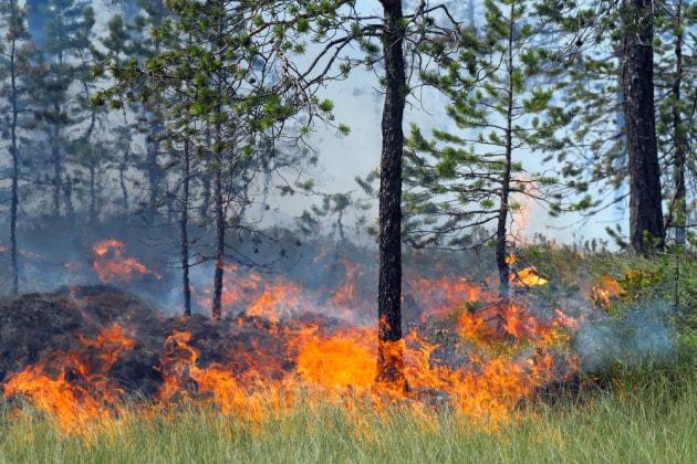 Incendio in una foresta di conifere in Siberia.