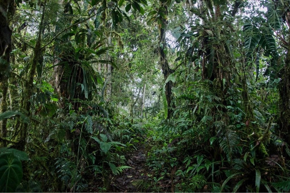 Biodiversità: Equador, la foresta pluviale