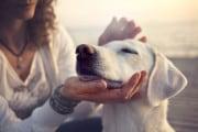 Dove (e come) è meglio accarezzare il cane ?