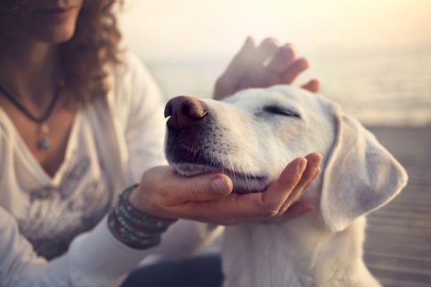 I cani e le carezze