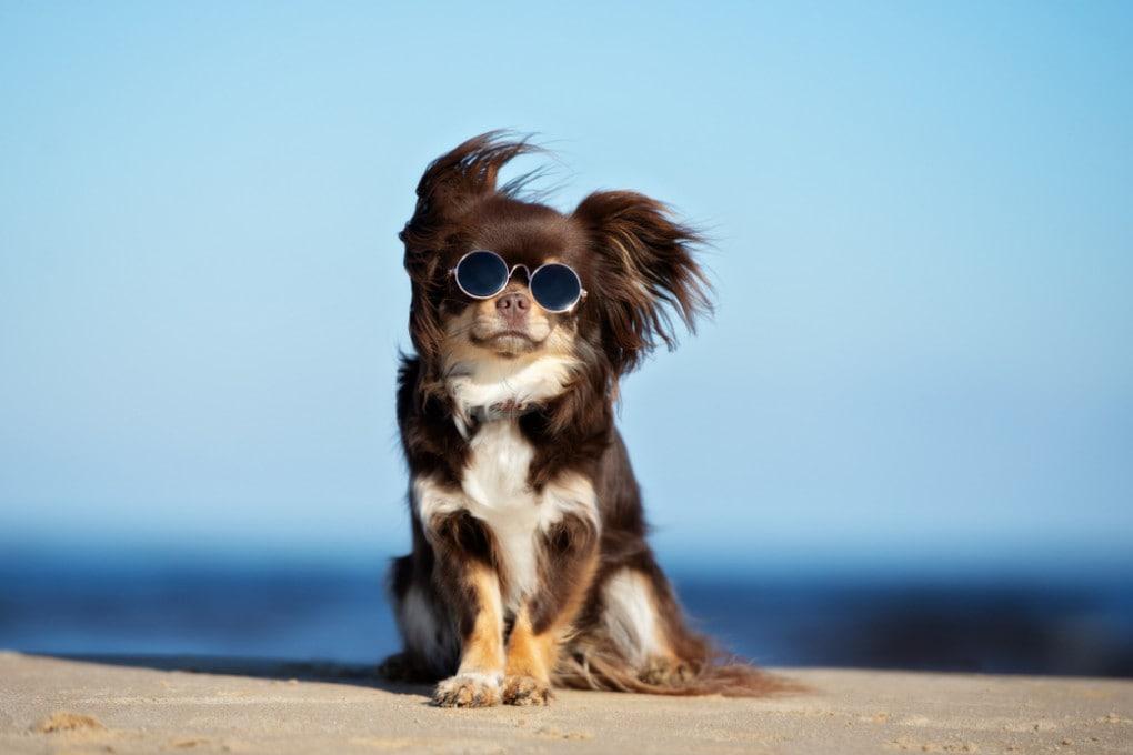 Un cane, forse in piena ribellione adolescenziale.