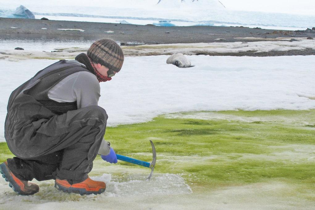 Ghiacciai verdi e rosa: microalghe in Antartide