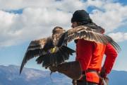 L'antica arte della falconeria