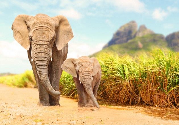 Quanto dura la gestazione nei mammiferi?