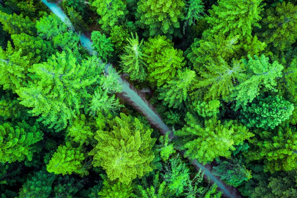 Foreste e global warming