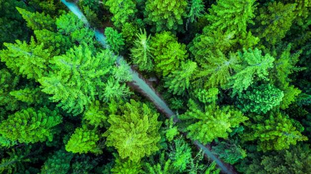 Cambiamenti climatici: perché le foreste sono solo parte della soluzione