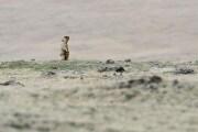 La peste bubbonica in Mongolia: che cosa c'è da sapere