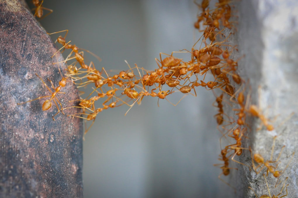 Distanziamento sociale e formiche