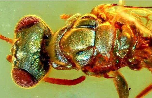 Un insetto dai colori iridescenti
