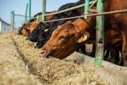 Meno carne in tavola per ridurre le emissioni di azoto