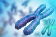 Ricostruita la prima sequenza genetica completa di un cromosoma X