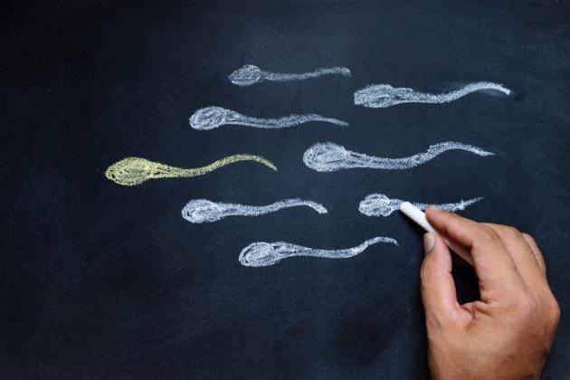 Origine degli spermatozoi