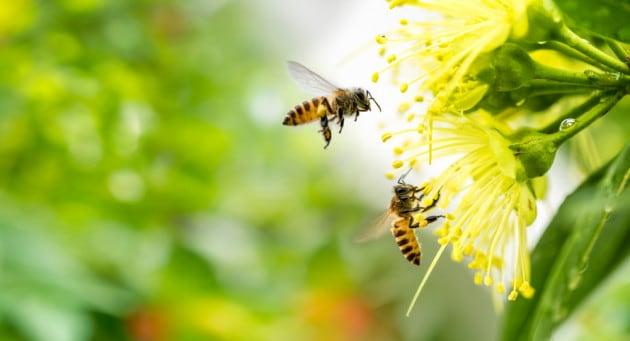 Le api e i loro network di impollinazione sono a rischio negli USA