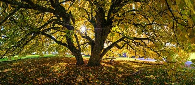 La natura in Alto Adige in autunno